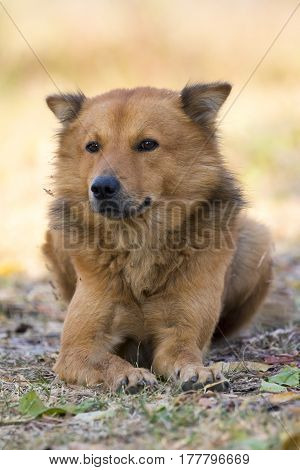 Image of brown dog on nature background. Pet.
