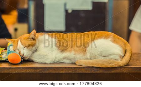 Resting red sleeping cat on the table
