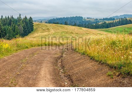 forest in mountain rural area. green agricultural field on a hillside. beautiful summer scenery in overcast weather