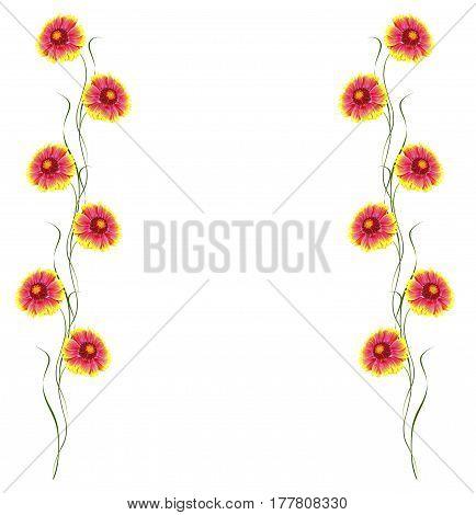 bright colorful flowers Gaillardia isolated on white background