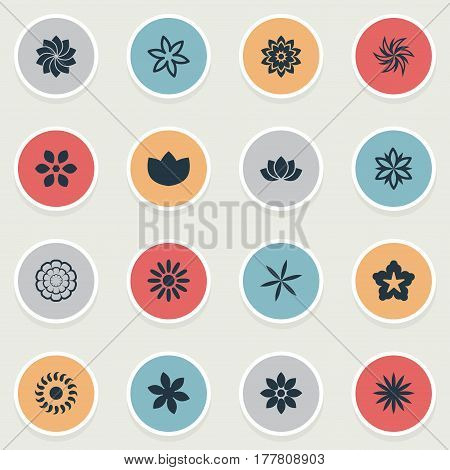 Vector Illustration Set Of Simple Flower Icons. Elements Cypress, Aster, Crocus And Other Synonyms Sunflower, Saffron And Cypress.