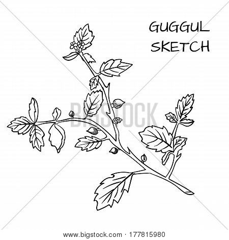 Guggul hand drawn VECTOR outline sketch, black contour. isolated on white