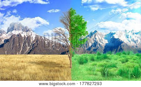 The concept of rebirth. Dead and live tree on the mountains backgrounds