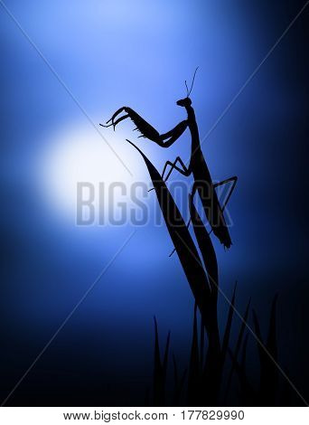 Praying mantis sitting on a cactus plant