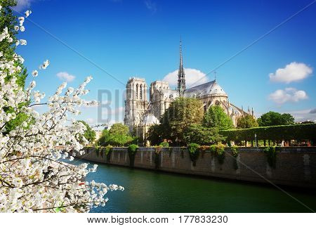 Notre Dame cathedral and Seine river at spring day, Paris, France