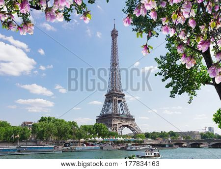 eiffel tour over Seine river with tree and spring magnolia flowers, Paris, France
