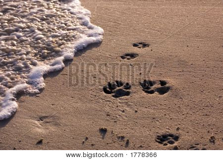 Dog Paw Prints On Beach