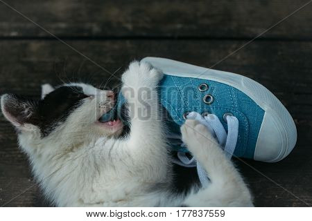 Cute Kitten Cat Biting Blue Gumshoe