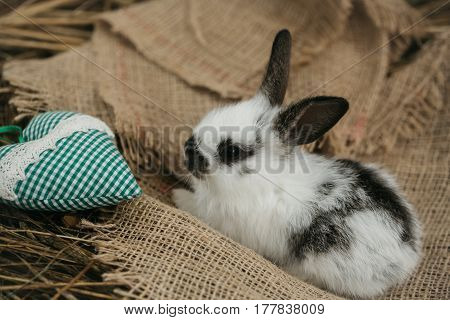 Cute Rabbit Lying With Green Heart On Sackcloth