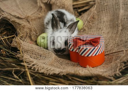 Cute Rabbit With Green Apples And Red Heart Gift Box