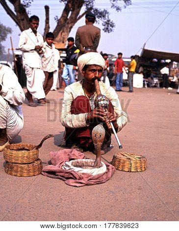 DELHI, INDIA - NOVEMBER 21, 1993 - Snake charmer tempting cobra snakes out of their wicker baskets outside the Red Fort Delhi Delhi Union Territory India, November 21, 1993.