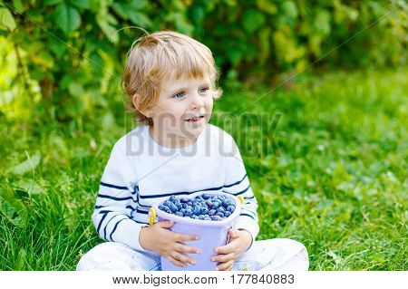 Cute little kid boy picking fresh berries on blueberry field. Child pick blue berry on organic farm. Little toddler boy play outdoors in fruit orchard. Preschooler gardening. Family having summer fun