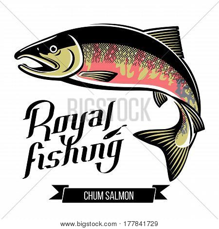 Chum Salmon fish. Color outline vector illustration