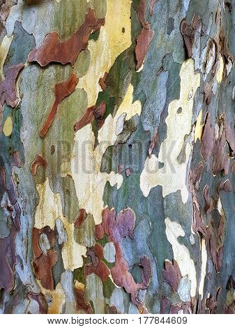 An Army Style Natural Tree Bark Camouflage Natural Texture