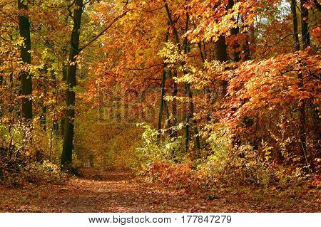 Fall in forest with trees and colorful leaves