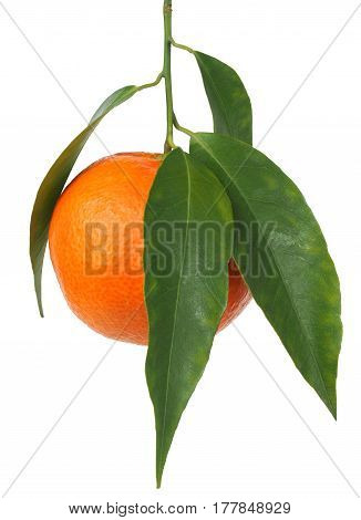 Mandarin orange with leaves isolated on white