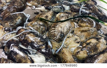 Fresh Cuttlefish At A Market In Italy
