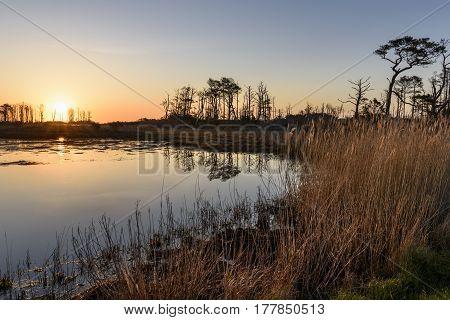 Sunrise over Marsh Pond Along Virginia Coast