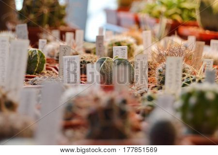 Exhibition of cacti. Inscriptions with plant names