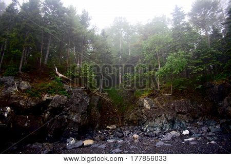Craggy Rocky Shoreline In Maine With Fog And Trees