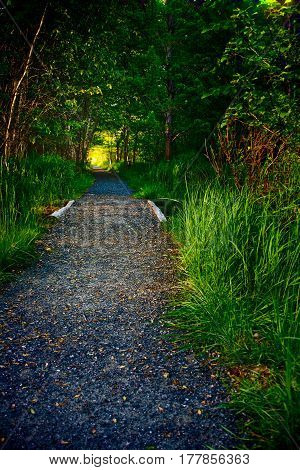 Bright Gravel Hiking Path In Acadia National Park