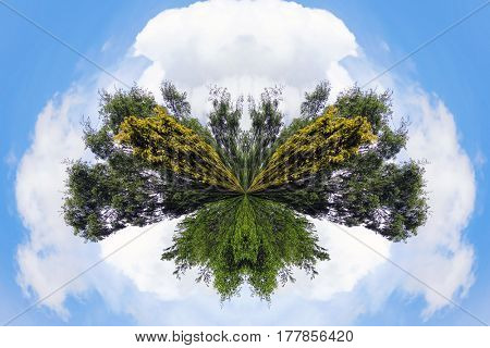 Small planet effect applied to trees with cloud sky