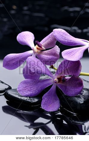 Still life with beauty orchid and stone