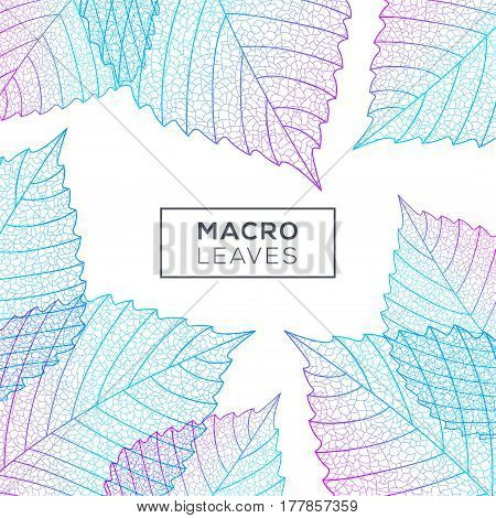 Background with elm leaves macro structure. Blue and pink colors. Vector illustration. Environment and ecology concept frame with place for text.