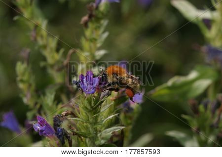 Insect in a flower