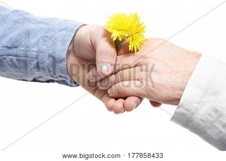 Old and young hands holding flowers together on white background