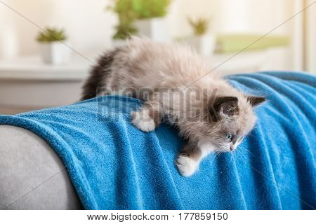 Cute little kitten on sofa covered with plaid