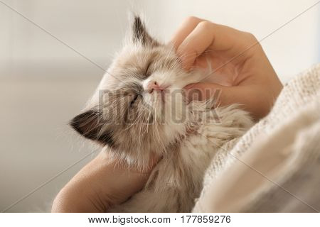 Close up view of cute little kitten with owner