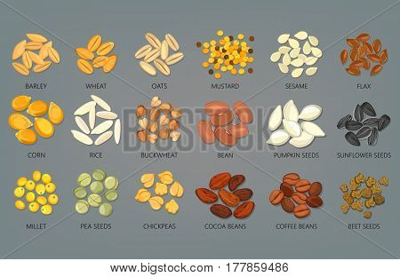 Seeds of sunflower and pumpkin, pea, beans of cocoa and coffee, beet. Barley and wheat, oats and mustard, sesame and flax, corn and rice, buckwheat and bean, millet and chickpeas grains. Food