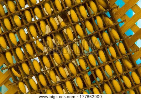 Silkworm Cocoons In Weave Bamboo Threshing Basket