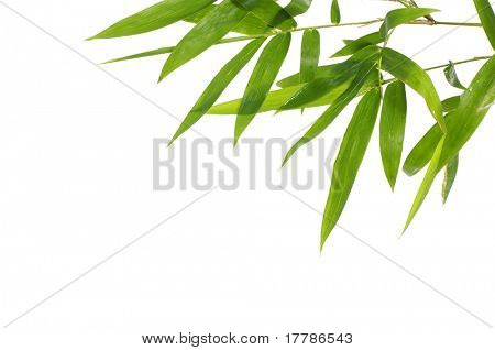 Bamboo leaves with copy space