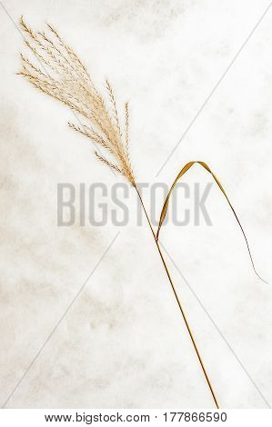 View of one dry grass with background