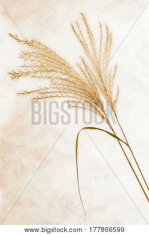 View of two dry grass with background