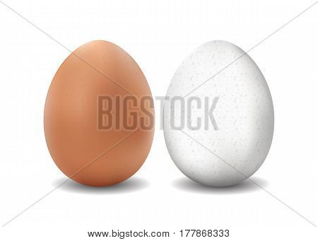 Two 3d isolated vector realistic white and brown eggs on white background