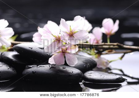 Black stone and white cherry with reflection