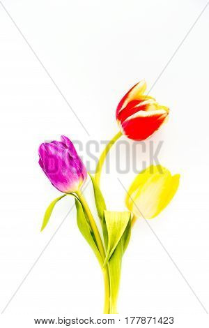 Top view of three tulips in yellow purple and red colors on white background with copy space.