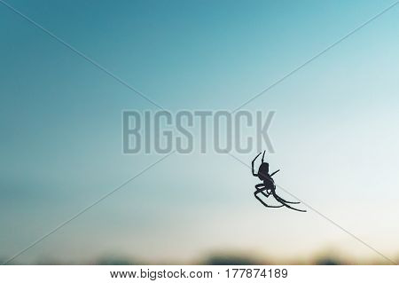 Silhouette of  spider hanging on its web on blue abstract background, copy space