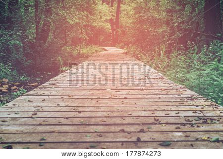 Wooden path, way, track from planks in forest park, perspective, toned image in warm tones, copy space