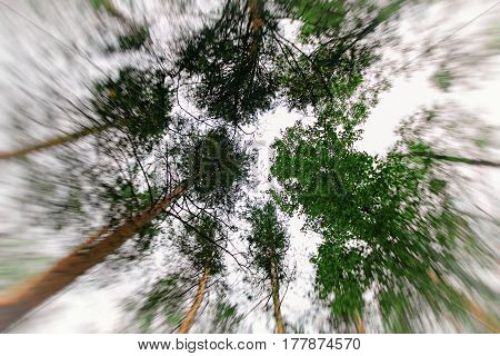 Trees converge in the center. Shot from the bottom up. Through the trees you can see a very bright sky. The edges of the frame motion blur.