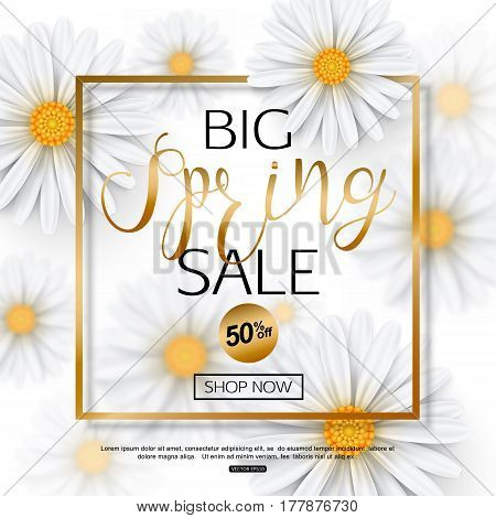 Spring sale banner with realistic chamomile flower, gold frame. Vector illustration