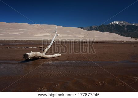 Felled tree lies in the spring waters of the Medano Creek in the Great Sand Dunes National park near Alamosa, Colorado