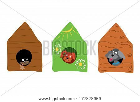 Three dogs look out of their booths / in an ecological house live happier