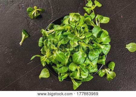 Mache Salad, Raw