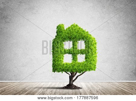 House shaped green tree as real estate concept