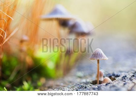 Small beautiful mushrooms on a stump. Lovely small mushrooms. Warm sunlight. Abstract macro picture. Wild nature. Life of insects. Mushrooms in forest