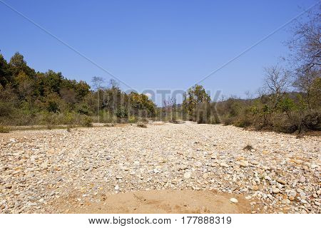 a dry river bed in kalesar national park with white pebbles and woodlands under a blue sky in india